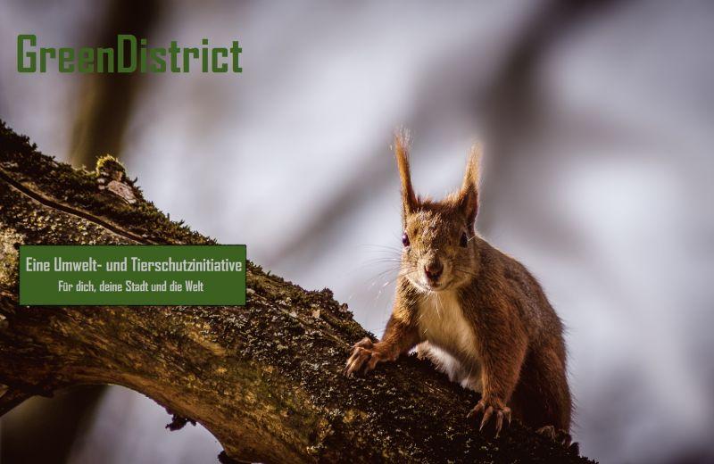 GreenDistrict Umwelt- und Tierschutzinitiative